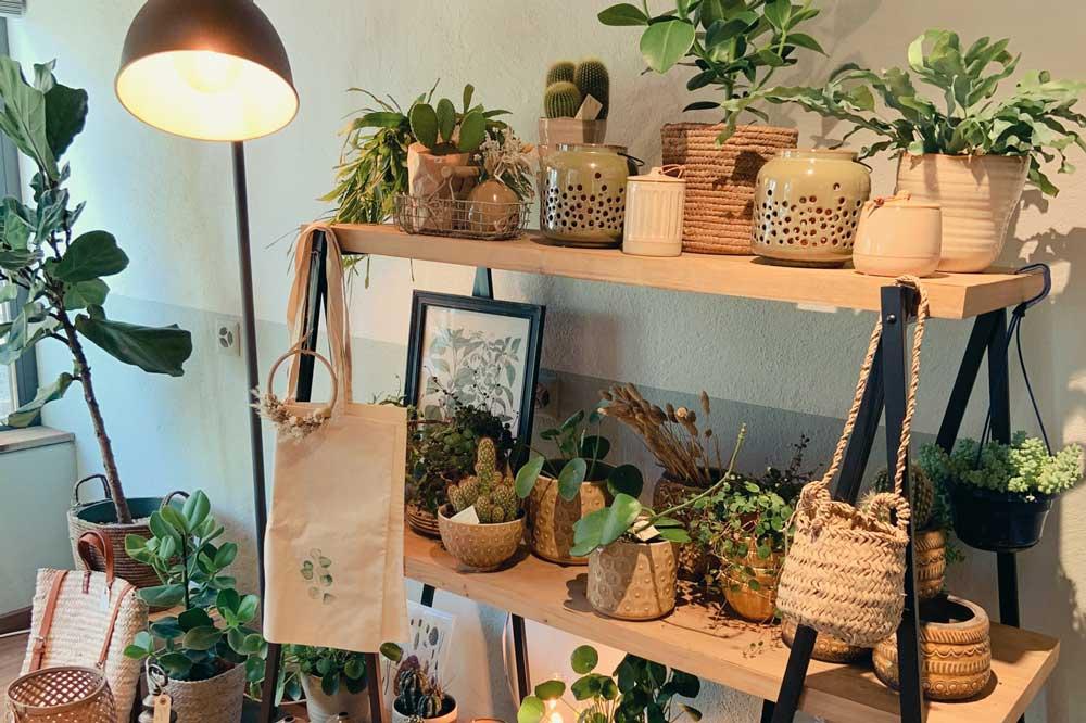 Pflanzen als Geschenke und Einrichtung